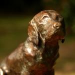 Labrador-Bob.jpg