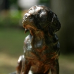 Labrador-Bob2.jpg